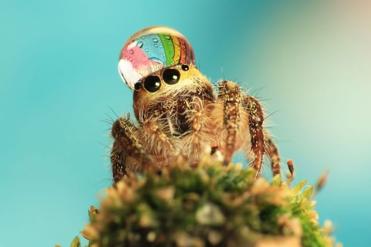 Spider wears a water drop as a fancy hat.