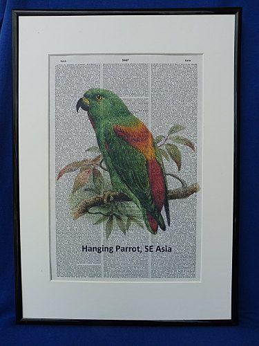 Hanging Parrot Dictionary Wall Art Print hanging by DecorisDesigns
