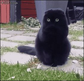 Kitteh Kats. Cat Photos, Cat Gifs, Cat Funny, Kitten pics, lots of Kittens. You…