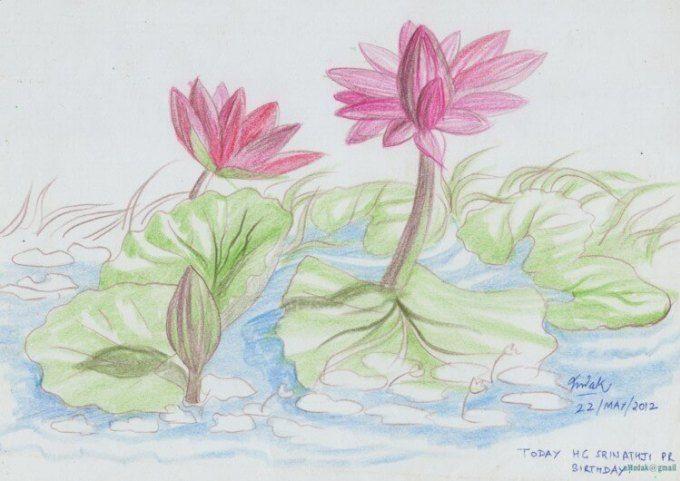 Bunga Teratai Bunga Teratai Sketsa Bunga Gambar Bunga