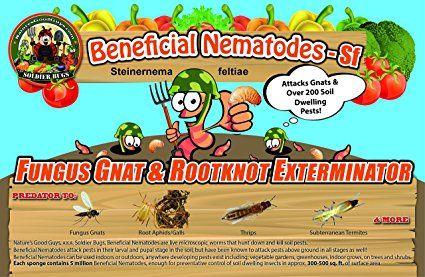 10 Million Live Beneficial Nematodes Sf - Fungus Gnat/Rootknot Gall Exterminator