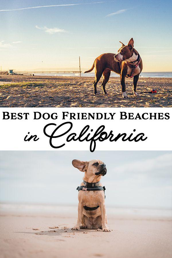 Best Dog Friendly Beaches In California California Unpublished In 2020 Dog Friendly Beach Dog Friends California Dog
