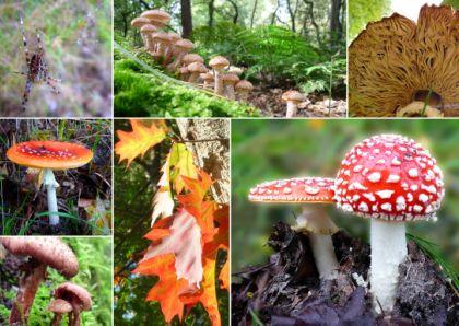 Paddestoelenmix, mix of mushrooms. http://www.kaartje2go.nl/kaartencollecties/creagaat---herfst?sk_id=161