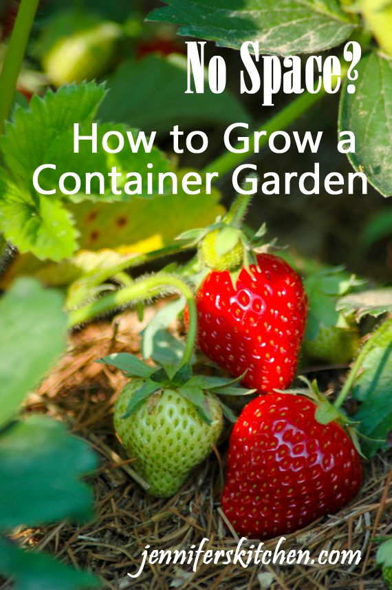 No Garden Space?  How to grow a garden in containers. http://jenniferskitchen.com/2013/04/small-space-gardening-how-to-grow-a-garden-in-containers.html