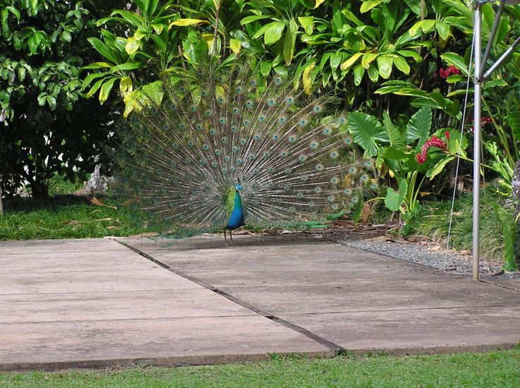 Ботанический сад На-Айна-Кай, Кауаи, Гавайи, США. Обсуждение на LiveInternet - Российский Сервис Онлайн-Дневников