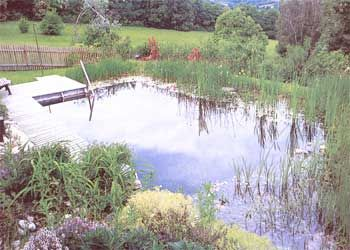 Learn how to build a natural swimming pool, with tips about zoning, filtration and algae control. From the MOTHER EARTH NEWS archives.