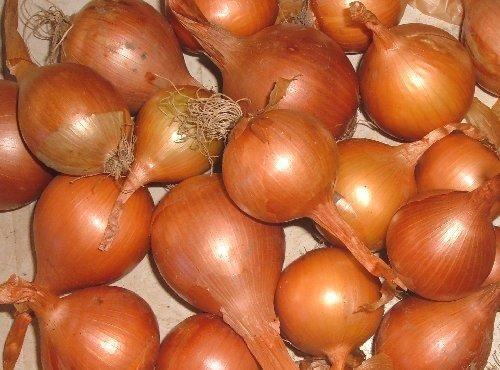 Raccogliere le cipolle ramate - Coltivare l'orto