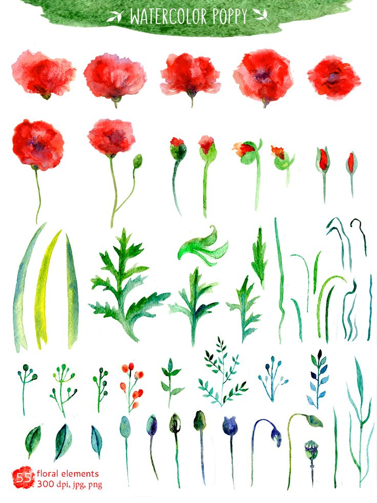 Watercolor Poppy Collection: 55 different isolated floral elements, 3 bouquets, 2 wreath and 2 frames in three formats.