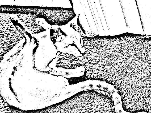 Color me in Gino | Oriental cat, Cats, Siamese