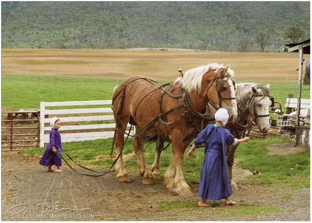 Amish children with draft horses -- just saw this on my trip to Lancaster County