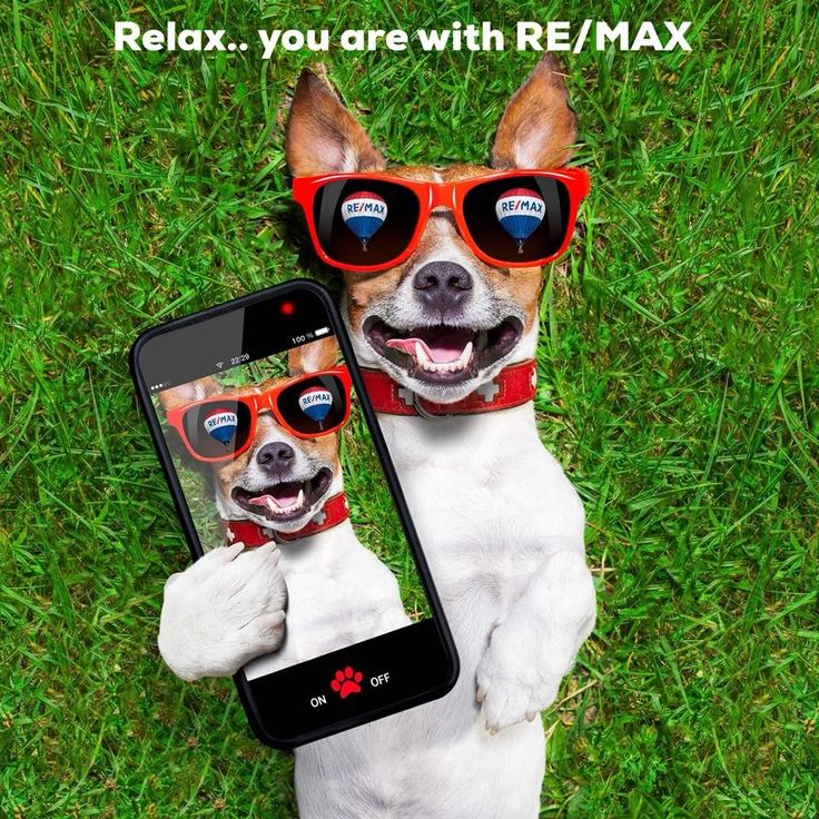 Dog pictures image by Pam Rogers on REMAX Funny selfies