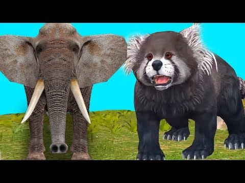 (3) Finger Family Rhymes | Animals Nursery Rhymes | Kids Preschool Songs | Animals Finger Family Rhymes - YouTube