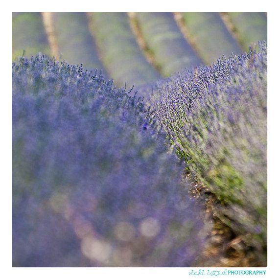 Lavender Fields  Fine Art Photography by vickiistedPHOTO on Etsy, £25.00  www.vicki-isted.co.uk