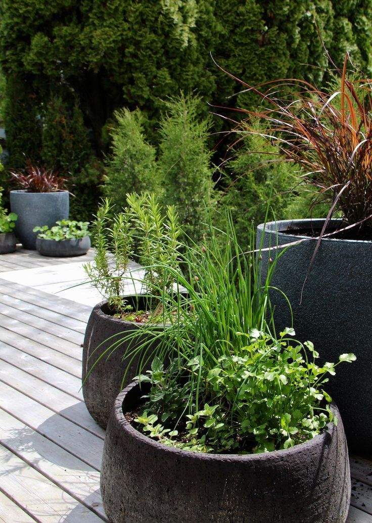 Detailed tutorial for how to create a beautiful and organic Herb Container Garden for your patio | Home for the Harvest