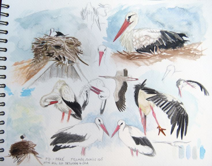 White stork sketch / bird aquarell watercolour painting drawing life study /