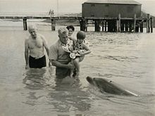 """Opo was a bottlenose dolphin who became famous throughout New Zealand during the summer of 1955/56 for playing with the children of the small town of Opononi on the Hokianga harbour.[1]  Opo was a wild dolphin that started following fishing boats around Opononi in early 1955[2] after her mother had been killed, and would swim daily in the bay close to town. She was originally named """"Opononi Jack"""", based on Pelorus Jack, since she was presumed to be male. Unlike the majority of dolphins, she…"""