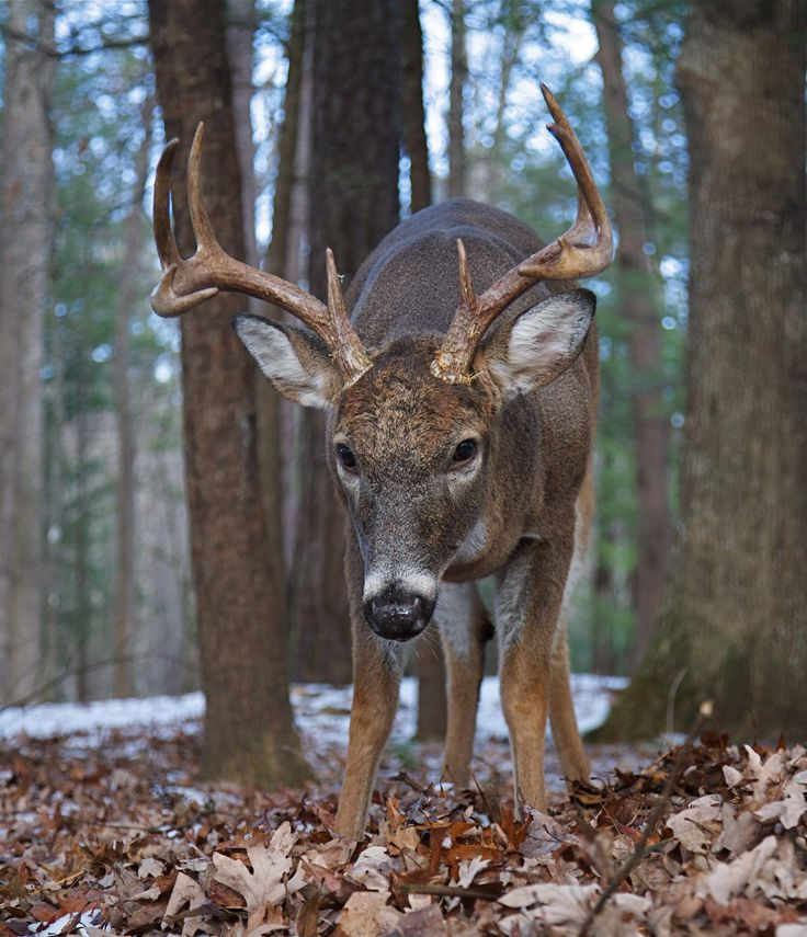 52 Best Images About Animals You Will See In The Smokies