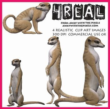 4 Real! 4 Realistic Meerkat Clip Art Images - realistic animal clip art for teachers! OK to make resources to sell on TPT - clip art OK for digital whiteboards too!