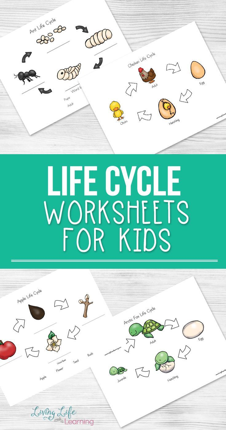 Life Cycle Worksheets For Kids Life Cycles Cycle For Kids Worksheets For Kids [ 1400 x 735 Pixel ]