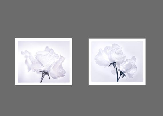 2 Print Sets of Sweetpea prints with a 15% reduction on the cost of the prints individually.       LIMITED EDITION Fine Art Prints  The total Edition Size is limited to 250 prints but they come in various sizes depending on the print.    Every print is numbered, titled and signed at the bottom.   A Certificate of Authenticity comes with every print    People often say that my images look like a watercolour paintings and I think this is because the paper and the colours I use are really…