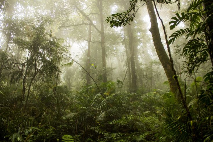 Speaking of forests, Indonesia has some gorgeous ones. Obviously. | 35 Gorgeous Pictures Of Indonesia That Will Take Your Breath Away