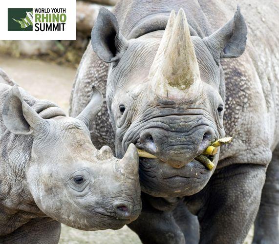 Hungry? ;) #RhinoSummit2014 www.youthrhinosummit.com #rhino #wildlife #nature #explore