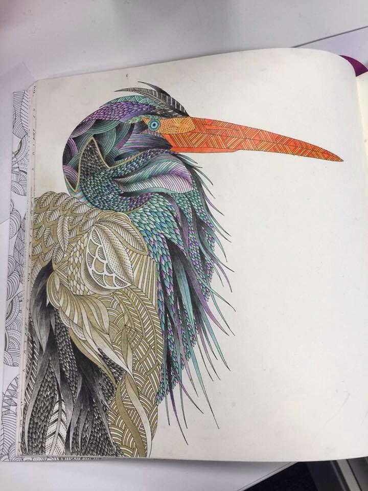 Heron Animal Kingdom by Millie Marotta Drawings