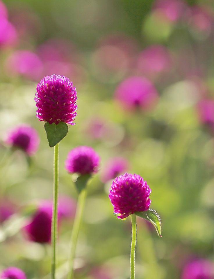 faire livrer un bouquet de fleurs à domicile 058 #fleurs #bouquet