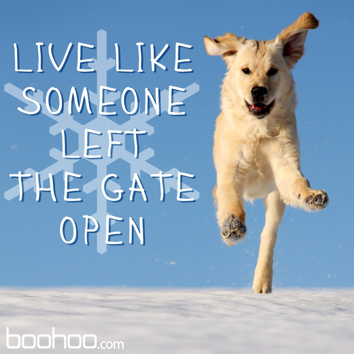 Live Like Someone Left The Gate Open Quote: 7 Best Live Like Images On Pinterest