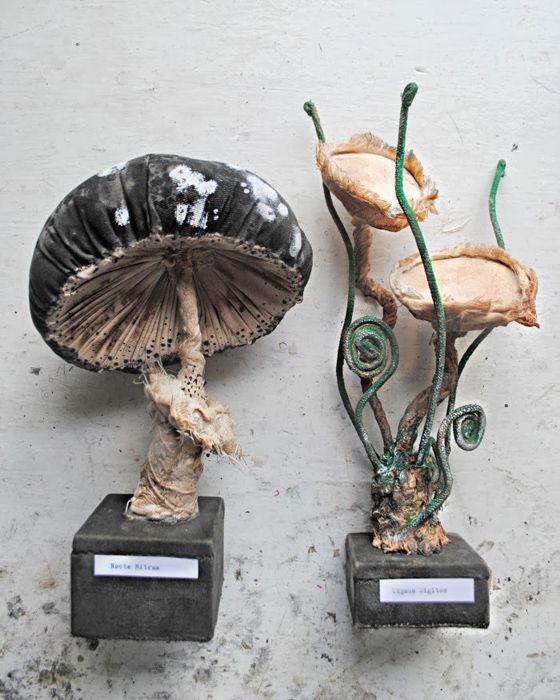 Волшебные грибы Мистера Финча.