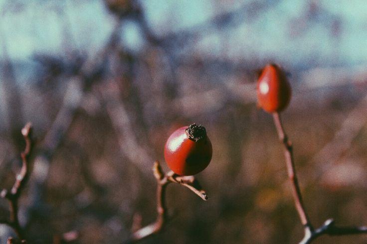 #autumn #lszlcsllphoto #lszlphotography 2017.oct.