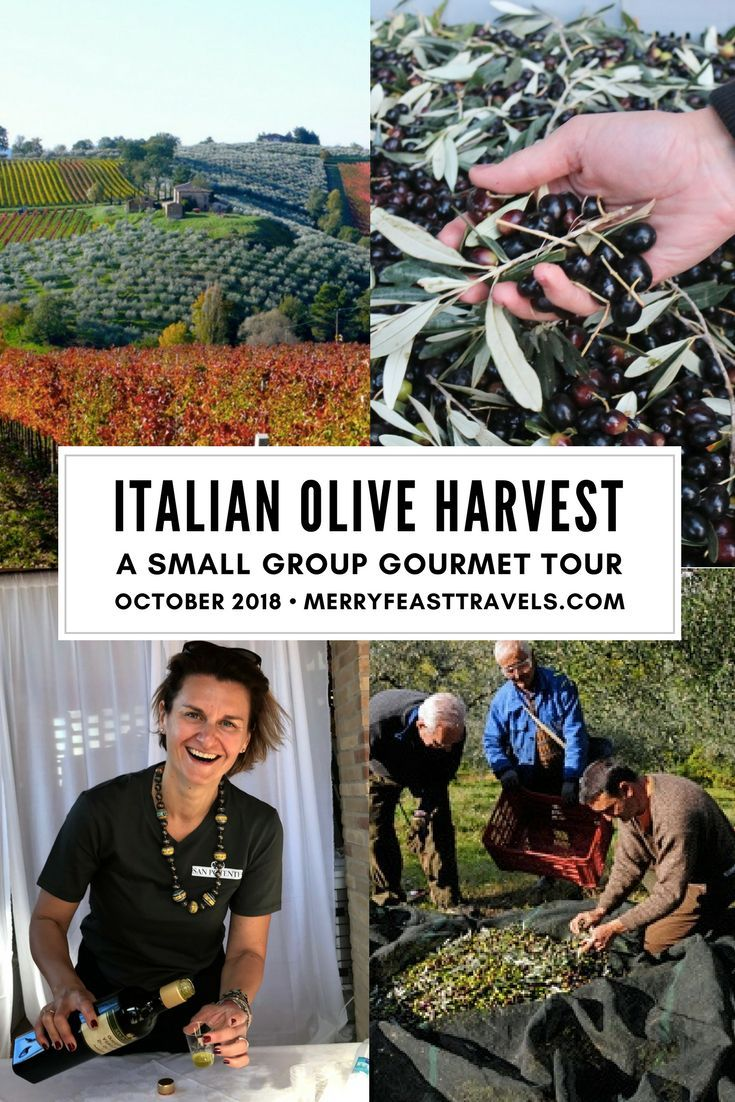 Italy Travel: Join us in Italy for the Olive Harvest, a beautiful and delicious time of year to explore Umbria.  This culinary adventure is for anyone who loves to learn about a culture through diving into the food of the region. Our days together will be spent experiencing the wine, gastronomy and culture of Umbria and enjoying the magic of Italy in Autumn. We take care of everything from the moment you arrive in Assisi, until you leave.  #italy #traveltips #foodtravel