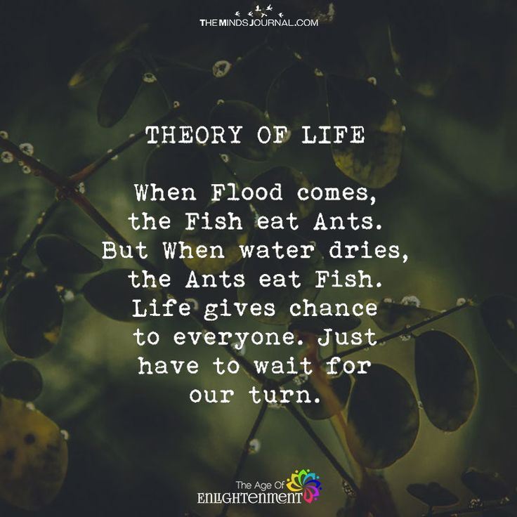 Theory Of Life - https://themindsjournal.com/theory-of-life/
