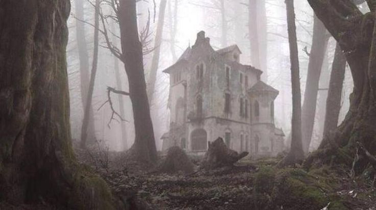 Abandoned House in the Woods
