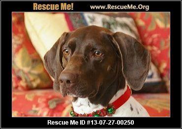 — Washington German Shorthaired Pointer Rescue — ADOPTIONS —RescueMe.Org