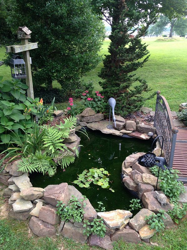 116 best images about real palm trees pond landscaping for Pond fountain ideas