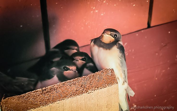 Portrait of The Swallow Family