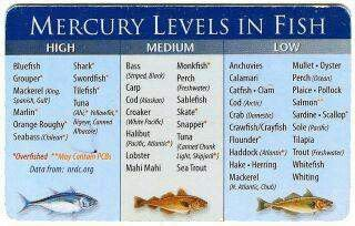 Mercury levels in fish food tips uses pinterest fish for Fish with high levels of mercury
