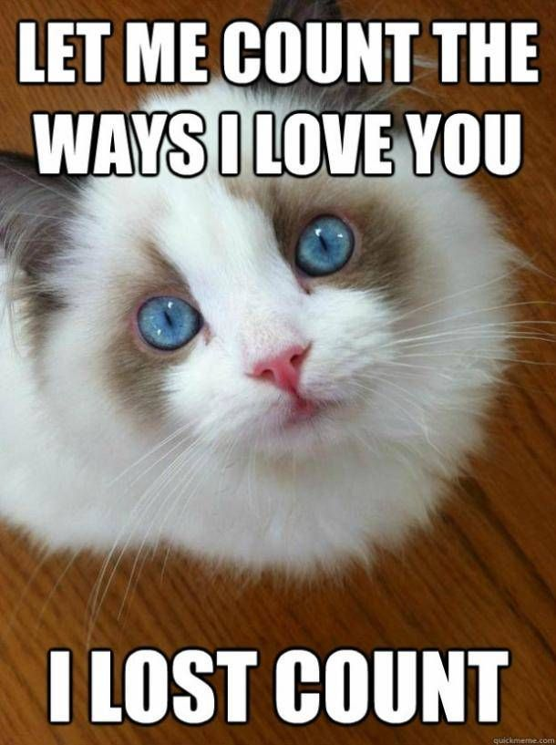 Funny Cats Memes Thoughts #hitsbluntmemes #relatablememes ...