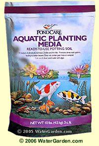 16 Best Images About Aquatic Plant Care On Pinterest
