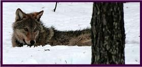Beleef een schitterende trektocht door het Noorse landschap inclusief ijsvissen en het zoeken naar wolvensporen!