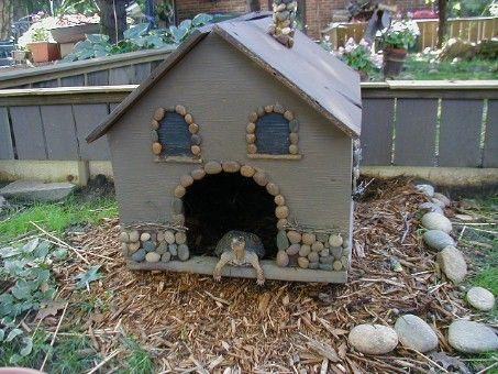 Diy tortoise house