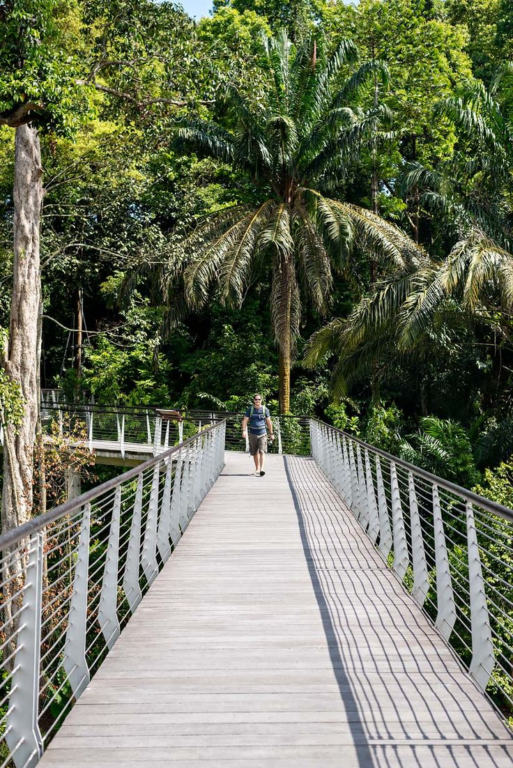 Ultimate Guide to the Best Places to Go, Eat and Stay in Singapore | Singapore Botanic Gardens