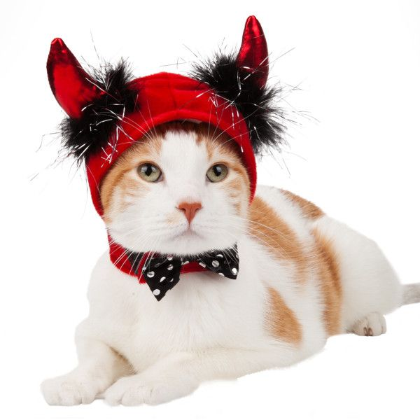 Cat Hat Allthehalloween Pinterest Halloween Costumes And Costumes