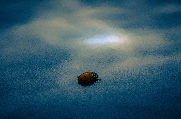 Ladybug & Cloud Reflection