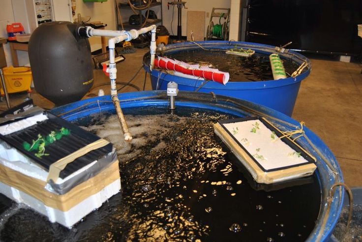 have your students design and build their own aquaponics systems waterloo ffa www
