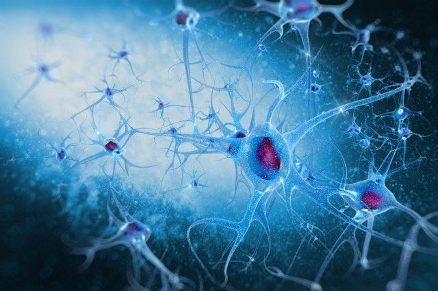 Scientists Regenerate Nerve Fibers After Spinal Cord Injury | IFLScience