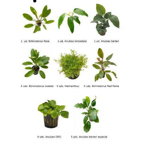 Plantas acuáticas naturales Sustrato para acuarios Abonado de plantas