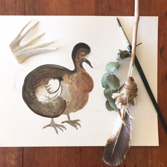 Dodo watercolour sketch using Micador paints in progress by Andrea Hamann (strongsoutherlyart)