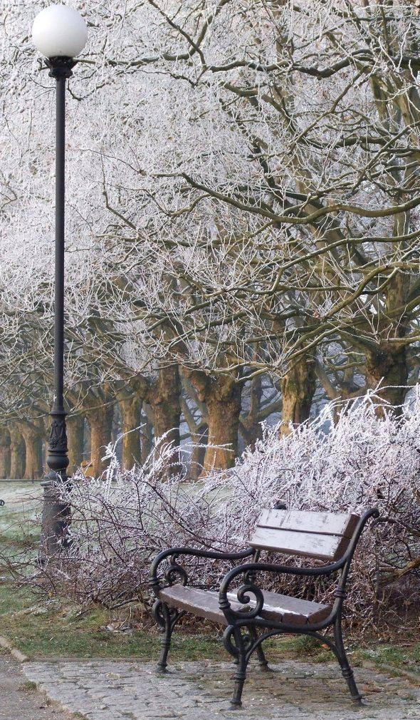 Winter in the park.. Szczecin, Poland   by Agnieszka Piatkowska